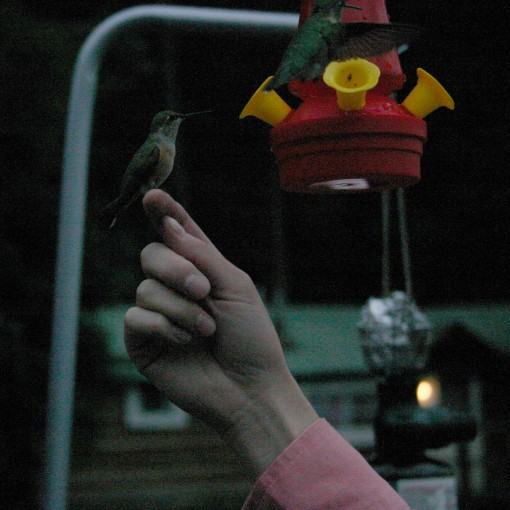 rachelbird